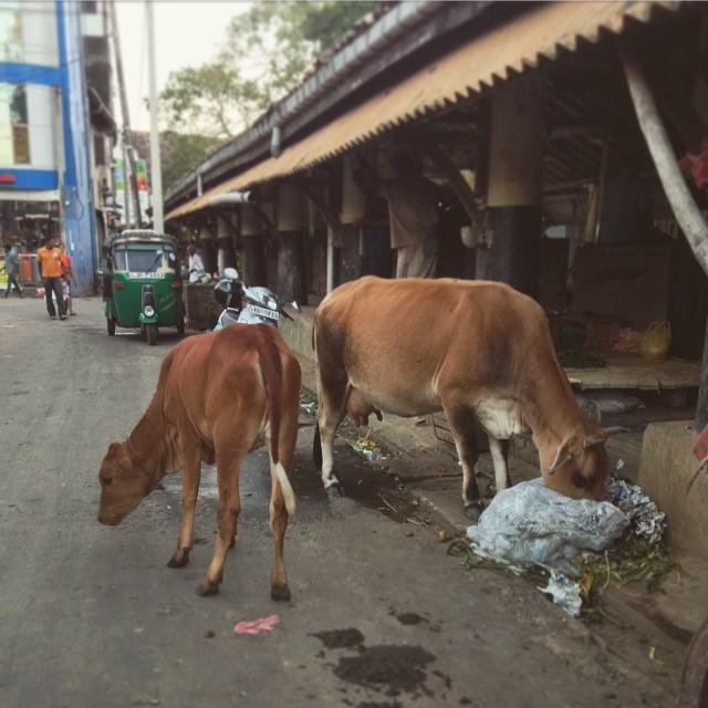 О рынках на Шри-Ланке