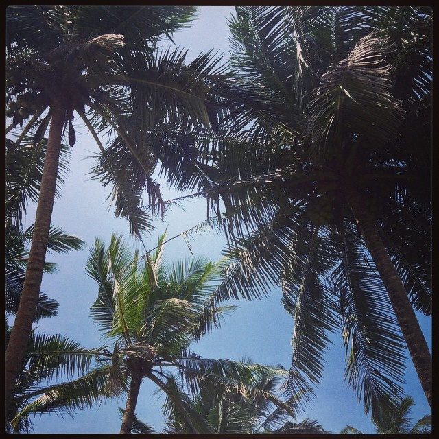 С Новым годом! —  Шри-Ланка