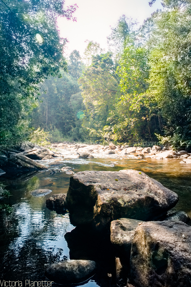 Река в лесу Синхараджа