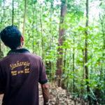 гид в лесу Синхараджа