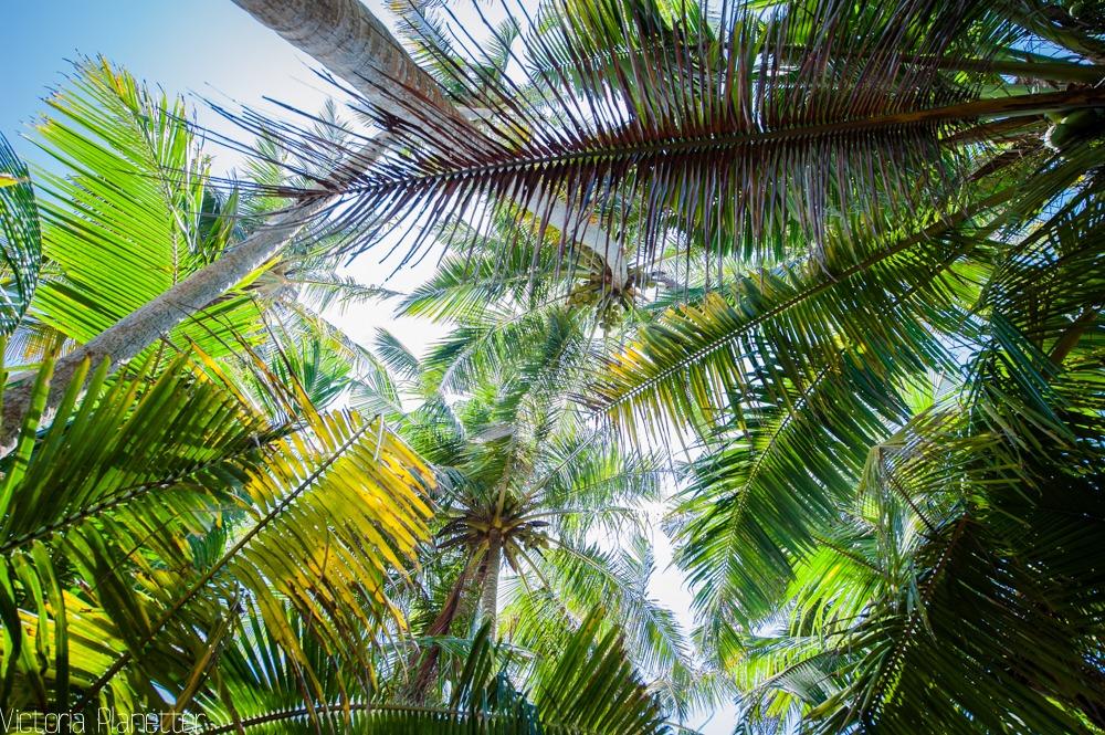 пальмы, вид снизу
