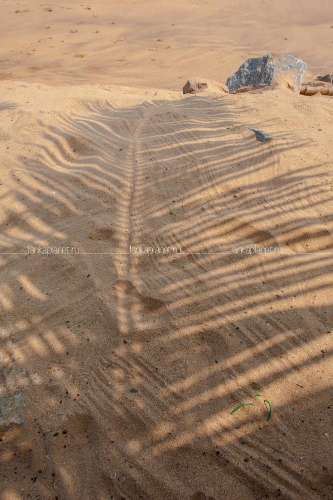 Пляж Тангалле, тень от пальмы