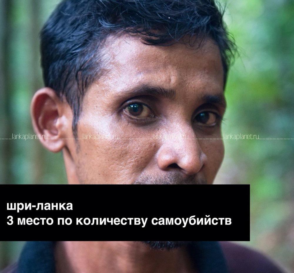 ланкиец, гид в лесу синхараджа, самоубийства