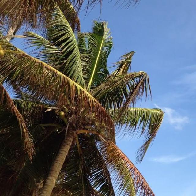 Теперь остров Шри-Ланки это мой второй дом.